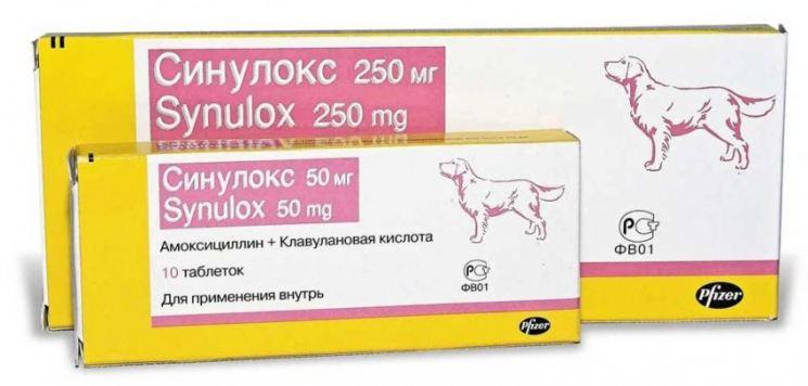 Можно ли давать собаке антибиотики для людей
