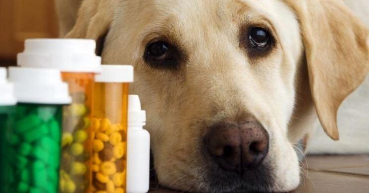 Черви в глазах у собаки фото начальная стадия лечение в домашних условиях
