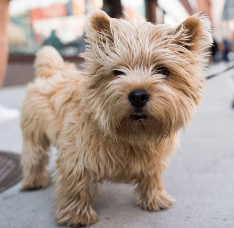 Породы терьеры собак с фото