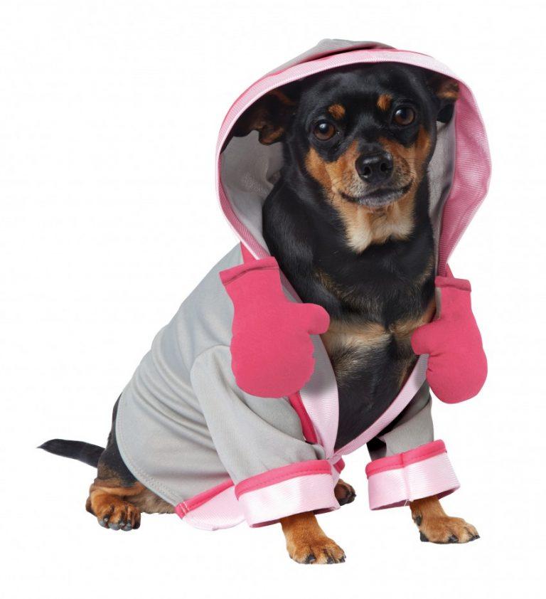 Красивые фото собак в одежде