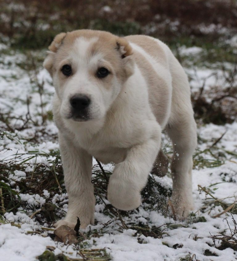 Фото собак азиаты