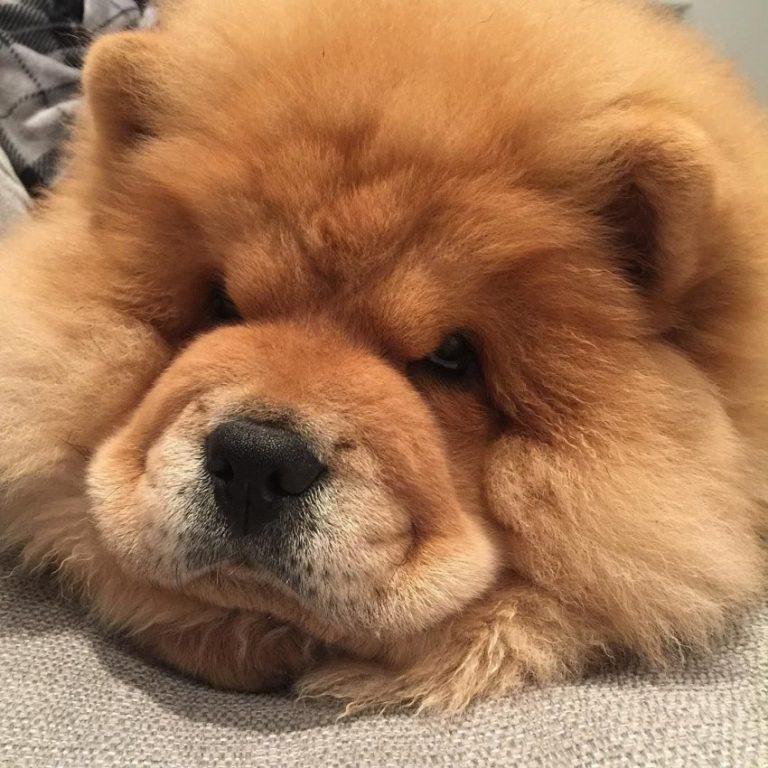 Картинки пушистых пород собак